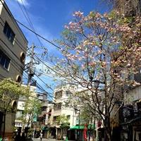 4月の本門寺通り商店街